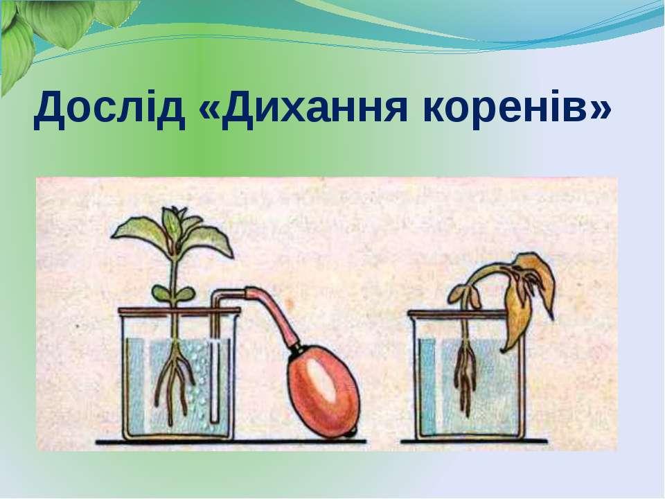 Функції листка фотосинтез дихання