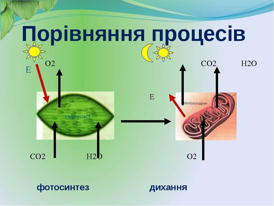 O2 CO2 H2O Е CO2 H2O O2 Е хлоропласт Порівняння процесів фотосинтез дихання