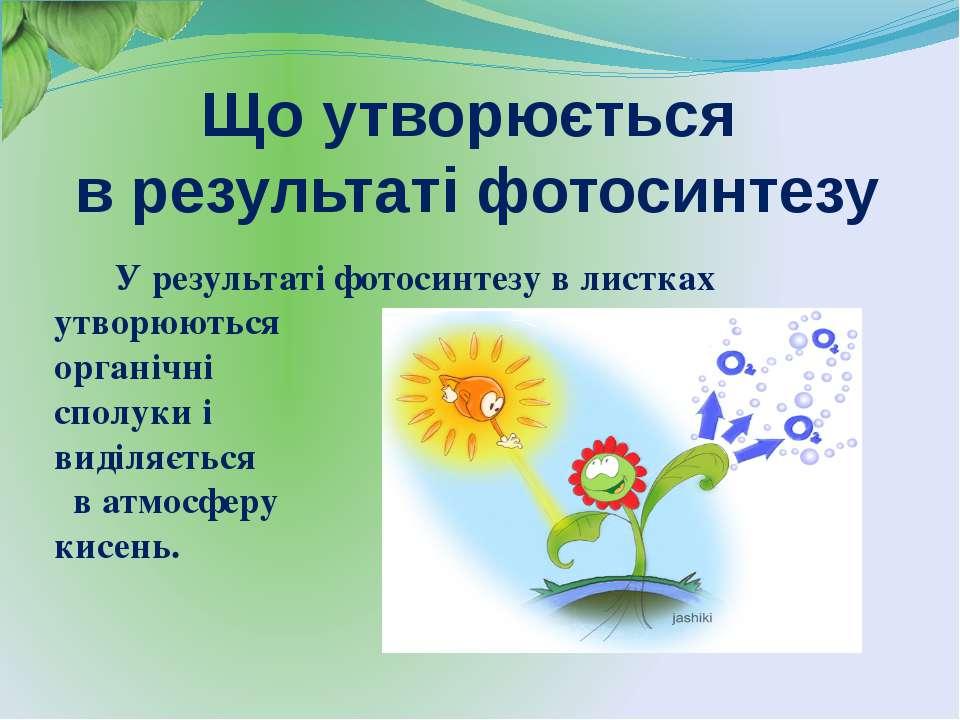 Що утворюється в результаті фотосинтезу У результаті фотосинтезу в листках ут...
