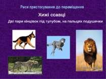 Риси пристосування до переміщення Хижі ссавці Дві пари кінцівок під тулубом, ...