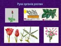 Рухи органів рослин