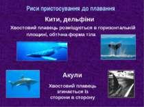 Риси пристосування до плавання Хвостовий плавець розміщується в горизонтальні...