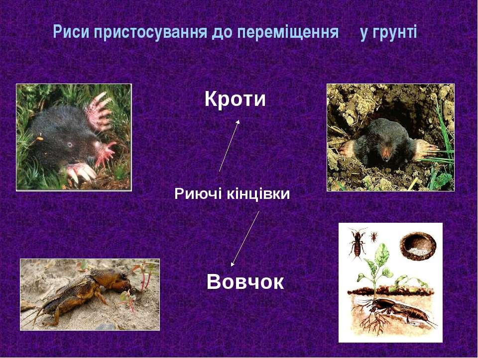 Риси пристосування до переміщення у грунті Кроти Риючі кінцівки Вовчок