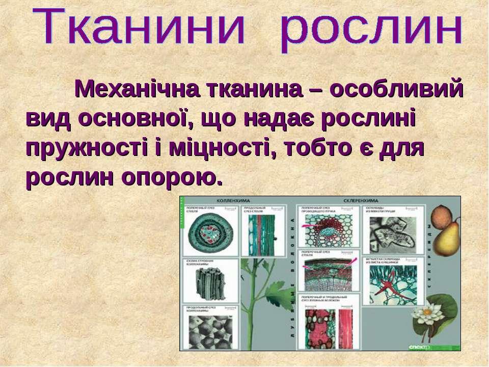 Механічна тканина – особливий вид основної, що надає рослині пружності і міцн...