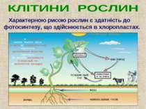 Характерною рисою рослин є здатність до фотосинтезу, що здійснюється в хлороп...