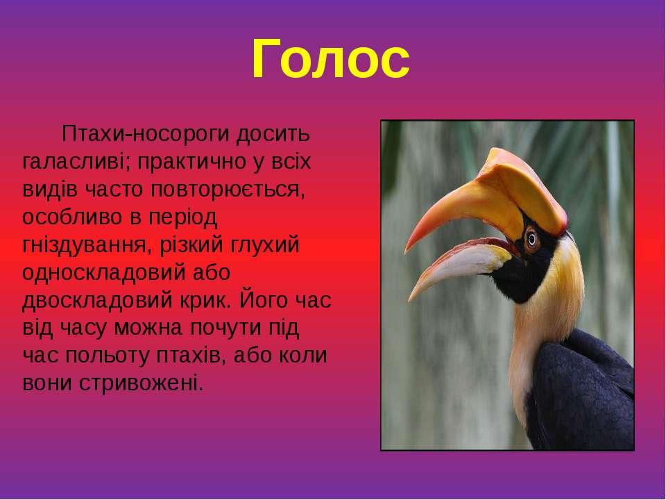 Птахи-носороги досить галасливі; практично у всіх видів часто повторюється, о...