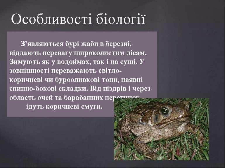 З'являються бурі жаби в березні, віддають перевагу широколистим лісам. Зимуют...