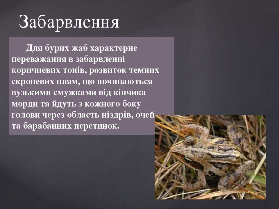 Для бурих жаб характерне переважання в забарвленні коричневих тонів, розвиток...