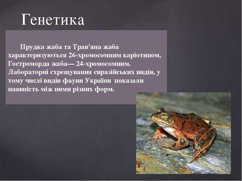 Прудка жаба та Трав'яна жаба характеризуються 26-хромосомним каріотипом, Гост...