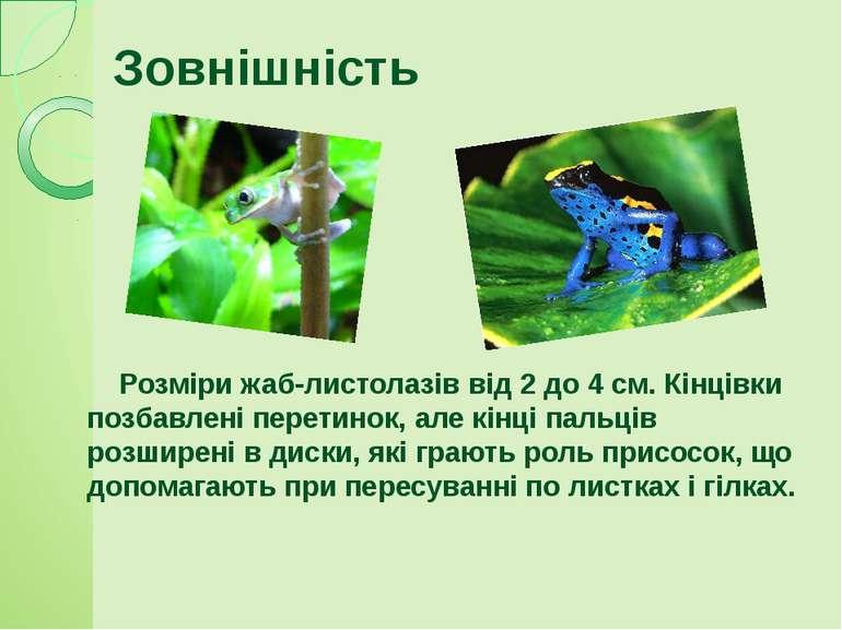 Розміри жаб-листолазів від 2 до 4 см. Кінцівки позбавлені перетинок, але кінц...