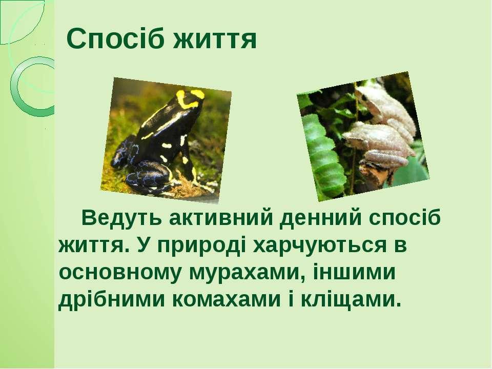 Спосіб життя Ведуть активний денний спосіб життя. У природі харчуються в осно...