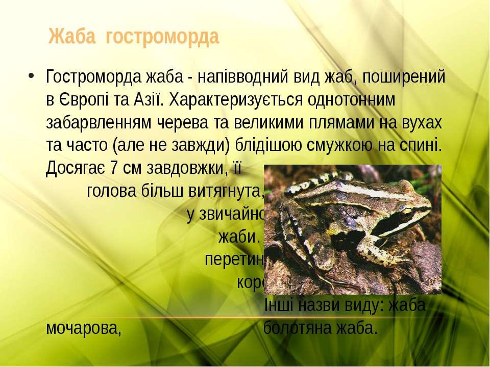 Жаба гостроморда Гостроморда жаба - напівводний вид жаб, поширений в Європі т...