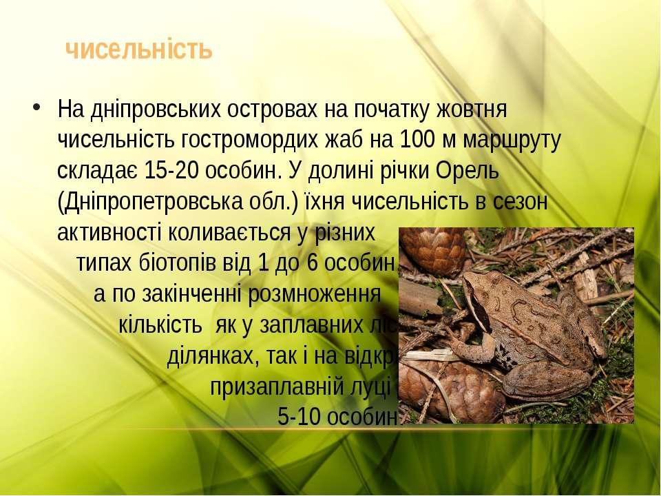На дніпровських островах на початку жовтня чисельність гостромордих жаб на 10...