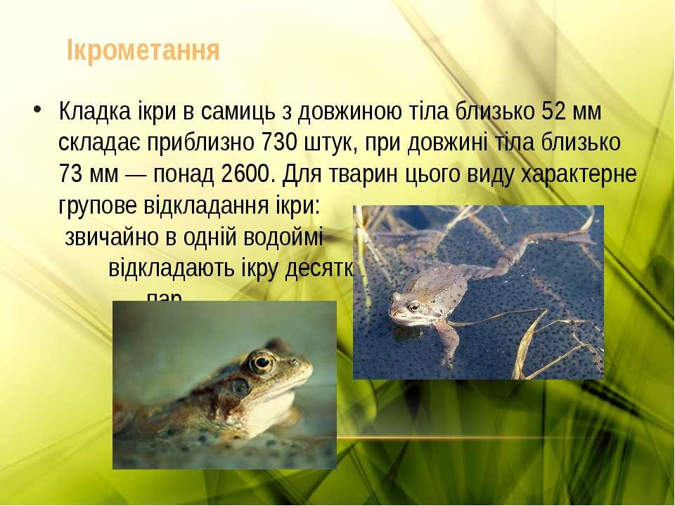 Кладка ікри в самиць з довжиною тіла близько 52 мм складає приблизно 730 штук...