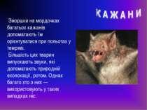 Зморшки на мордочках багатьох кажанів допомагають їм орієнтуватися при польот...