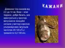 Довжина тіла кажанів від 2,5 до 14 см. Вони – нічні тварини, добре бачать, ал...