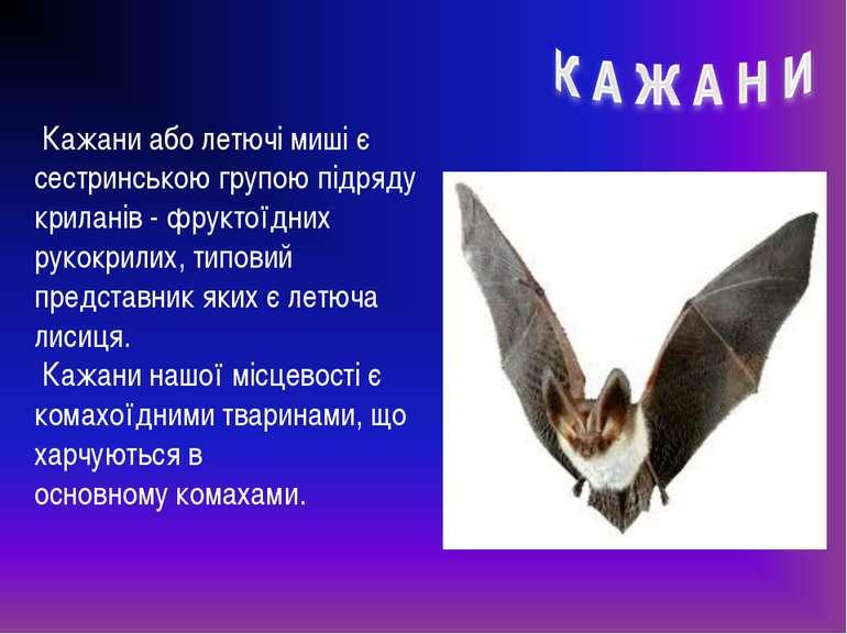 Кажани або летючі миші є сестринською групою підряду криланів- фруктоїдних р...