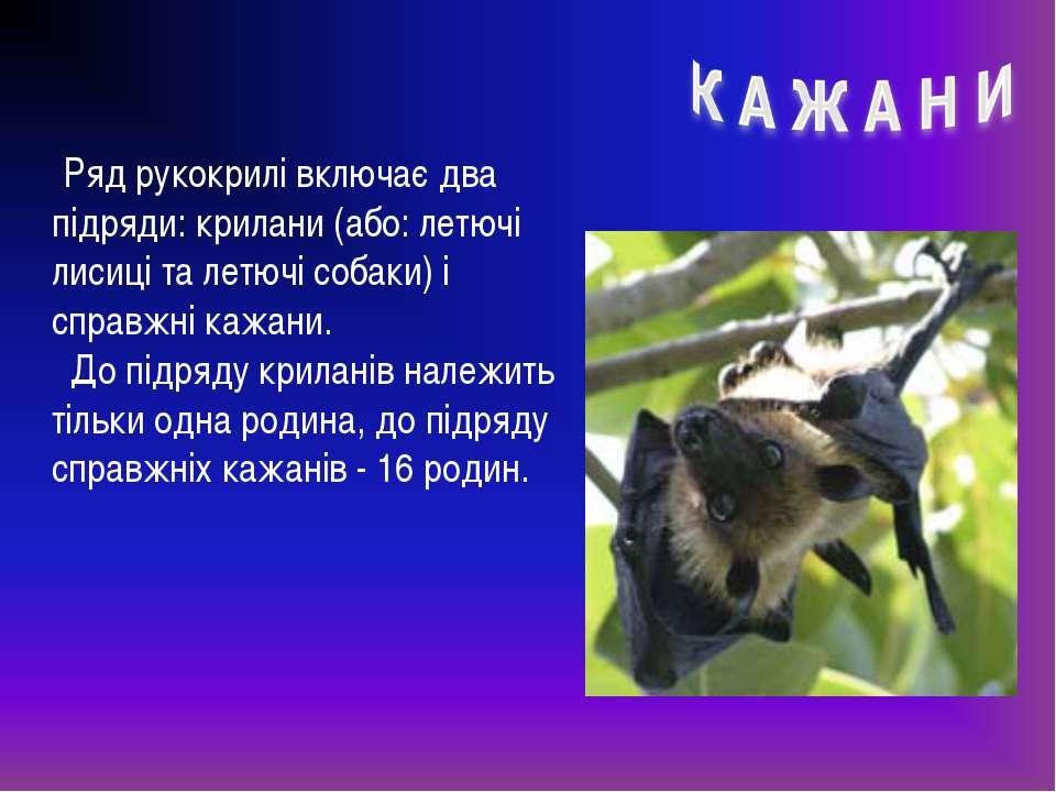Ряд рукокрилі включає два підряди: крилани (або: летючі лисиці та летючі соба...