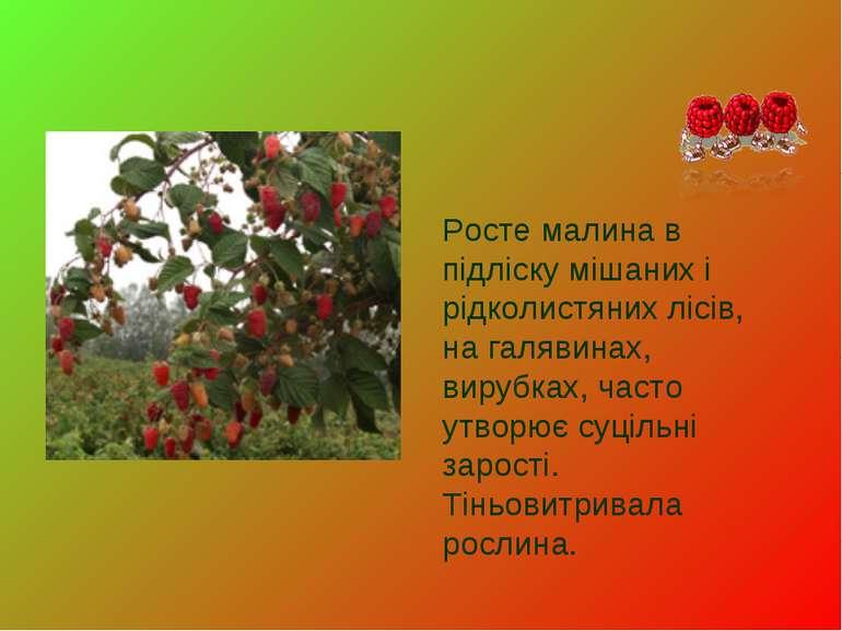 Росте малина в підліску мішаних і рідколистяних лісів, на галявинах, вирубках...