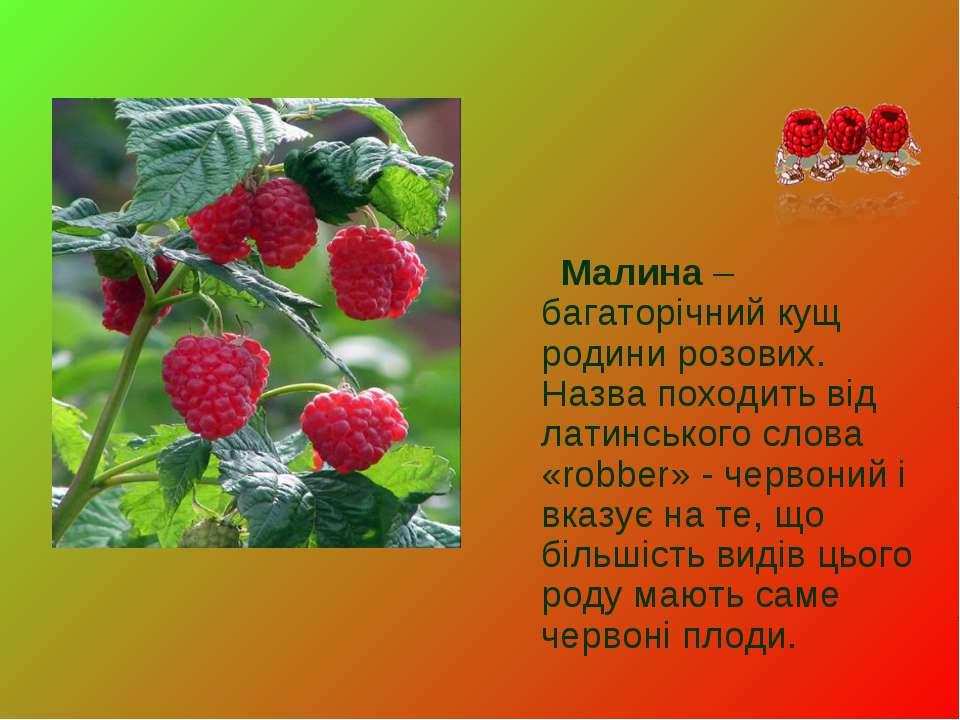 Малина – багаторічний кущ родини розових. Назва походить від латинського слов...