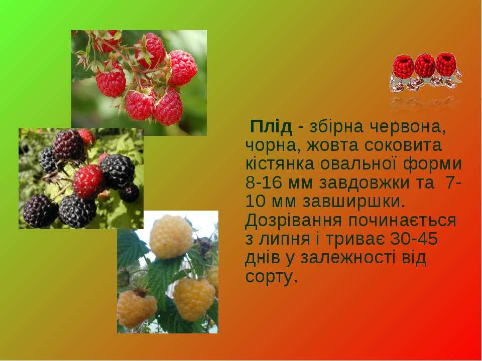Плід- збірна червона, чорна, жовта соковита кістянка овальної форми 8-16 мм ...