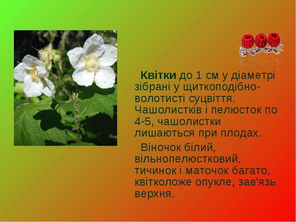 Квітки до 1 см у діаметрі зібрані у щиткоподібно-волотисті суцвіття. Чашолист...