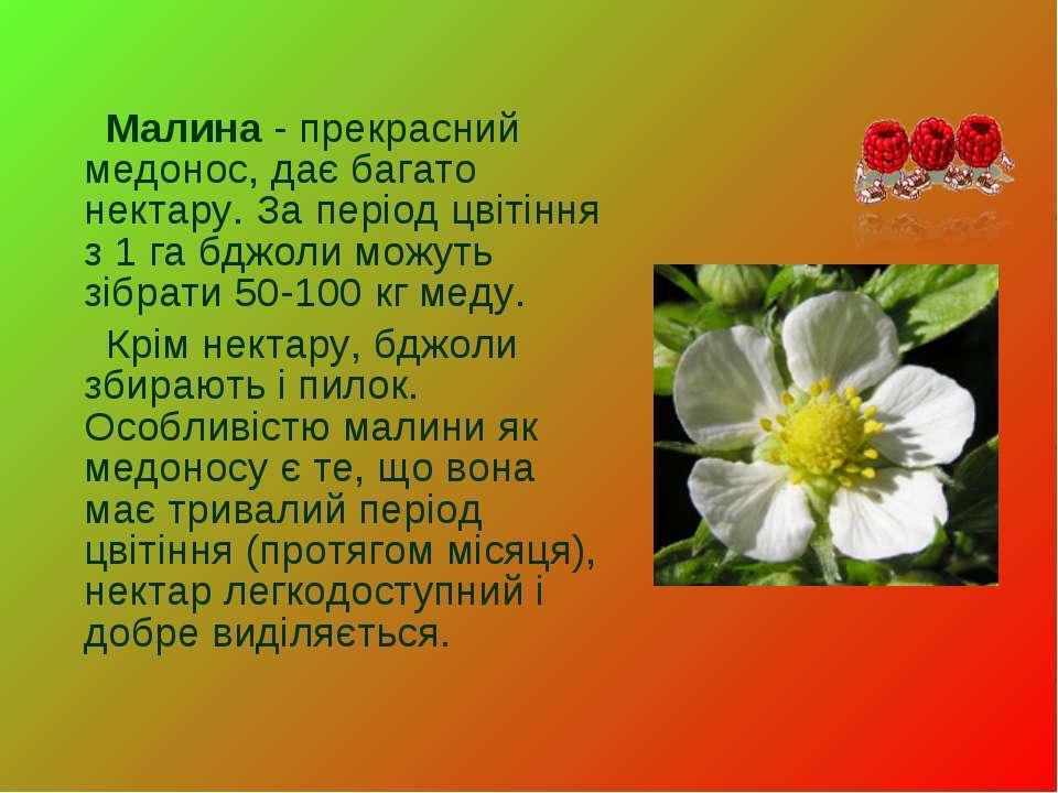Малина- прекрасний медонос, дає багато нектару. За період цвітіння з 1 га бд...