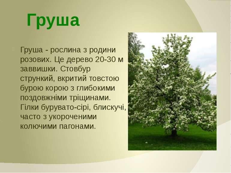 Груша - рослина з родини розових. Це дерево 20-30 м заввишки. Стовбур струнки...