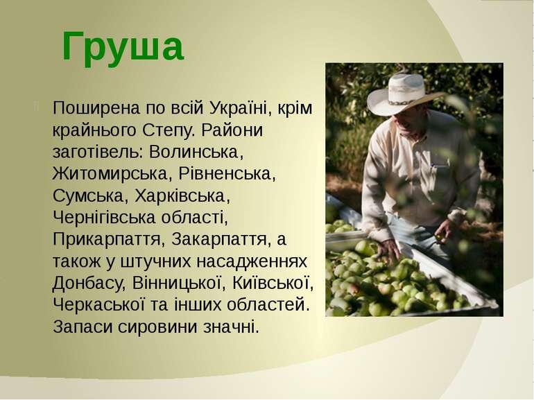 Поширена по всій Україні, крім крайнього Степу. Райони заготівель: Волинська,...