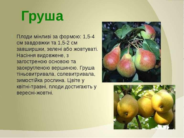Плоди мінливі за формою: 1,5-4 см завдовжки та 1,5-2 см завширшки, зелені або...