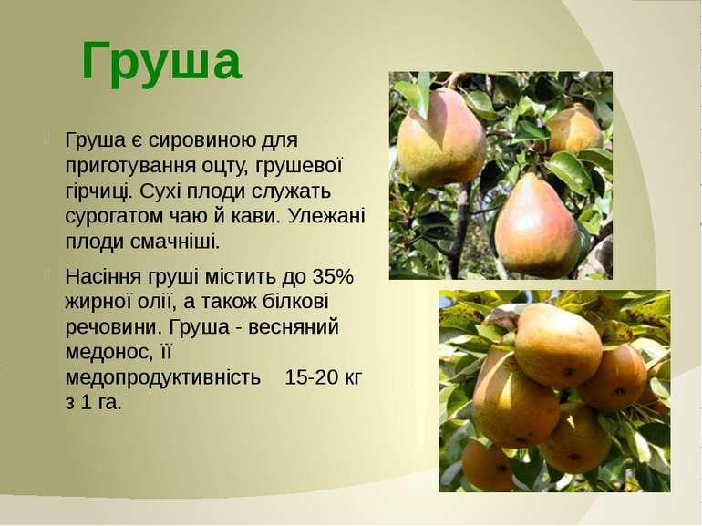 Груша є сировиною для приготування оцту, грушевої гірчиці. Сухі плоди служать...