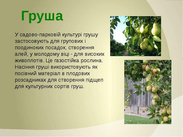 У садово-парковій культурі грушу застосовують для групових і поодиноких посад...