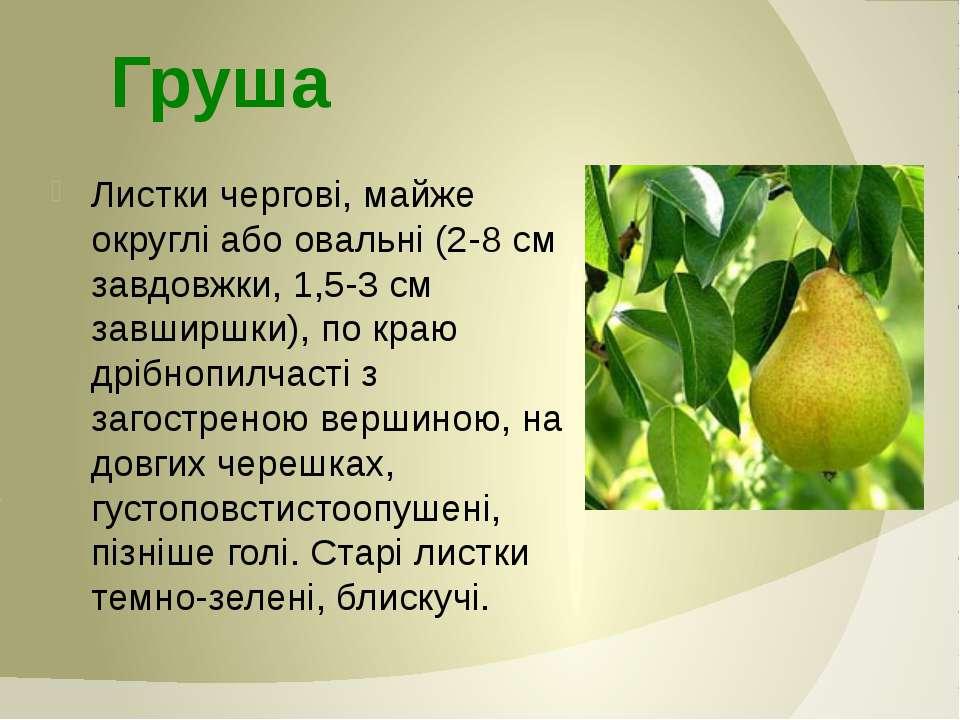 Листки чергові, майже округлі або овальні (2-8 см завдовжки, 1,5-3 см завширш...