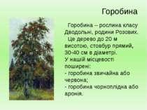 Горобина – рослина класу Дводольні, родини Розових. Це дерево до 20 м висотою...