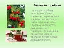 Значення горобини Із плодів горобини виготовляють зефір, мармелад, варення, і...