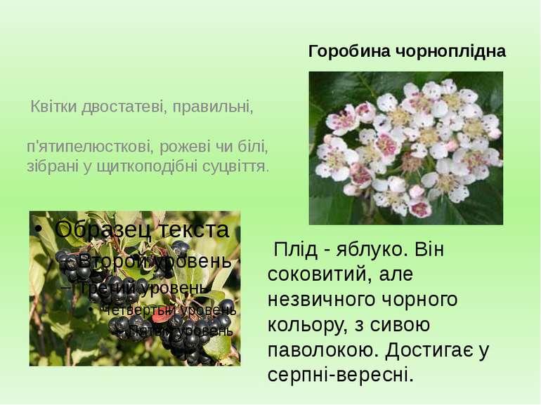 Горобина чорноплідна Квітки двостатеві, правильні, п'ятипелюсткові, рожеві чи...