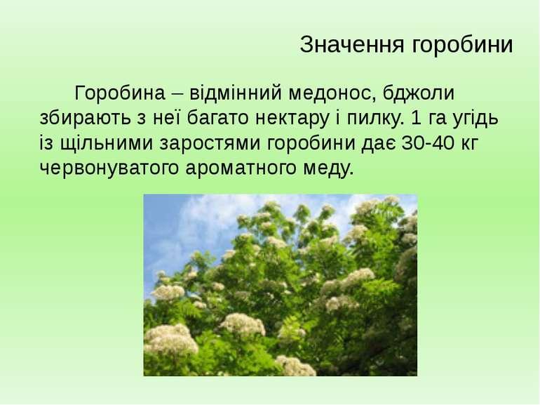 Горобина – відмінний медонос, бджоли збирають з неї багато нектару і пилку. 1...