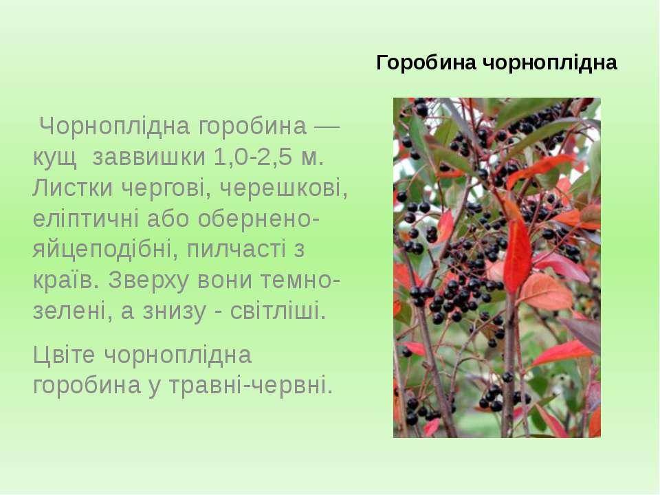Горобина чорноплідна Чорноплідна горобина — кущ заввишки 1,0-2,5 м. Листки че...