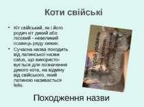 Кіт свійський, як і його родич кіт дикий або лісовий - невеликий ссавець ряду...