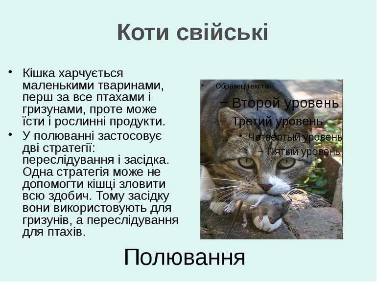 Полювання Кішка харчується маленькими тваринами, перш за все птахами і гризун...