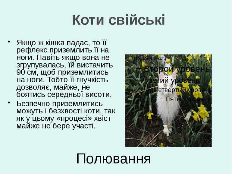 Полювання Якщо ж кішка падає, то її рефлекс приземлить її на ноги. Навіть якщ...