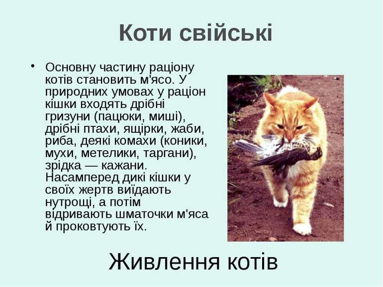 Основну частину раціону котів становить м'ясо. У природних умовах у раціон кі...