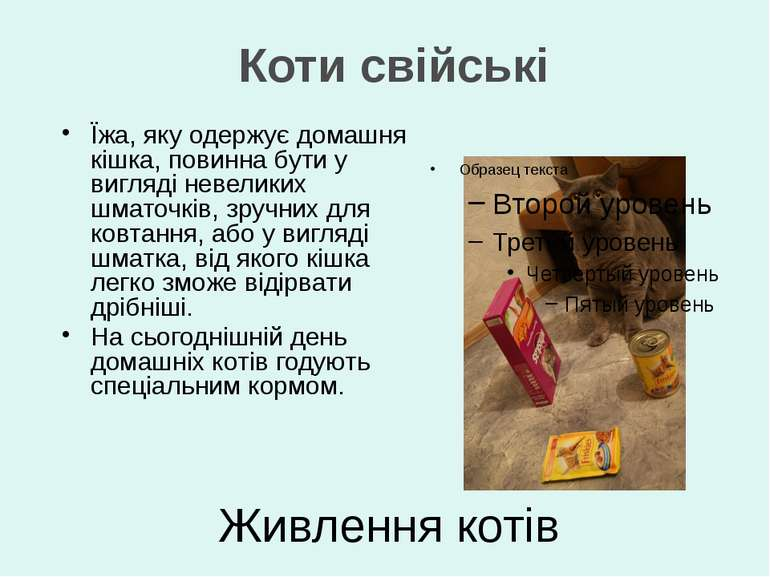 Їжа, яку одержує домашня кішка, повинна бути у вигляді невеликих шматочків, з...