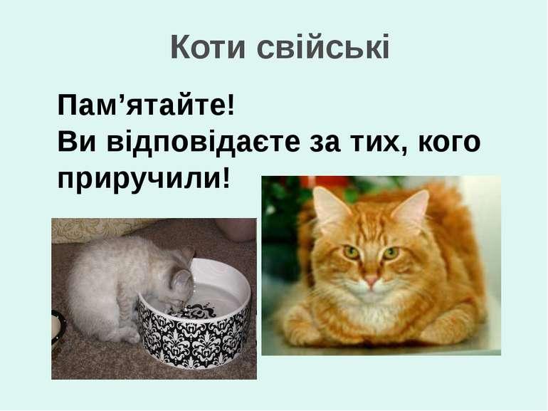Коти свійські Пам'ятайте! Ви відповідаєте за тих, кого приручили!