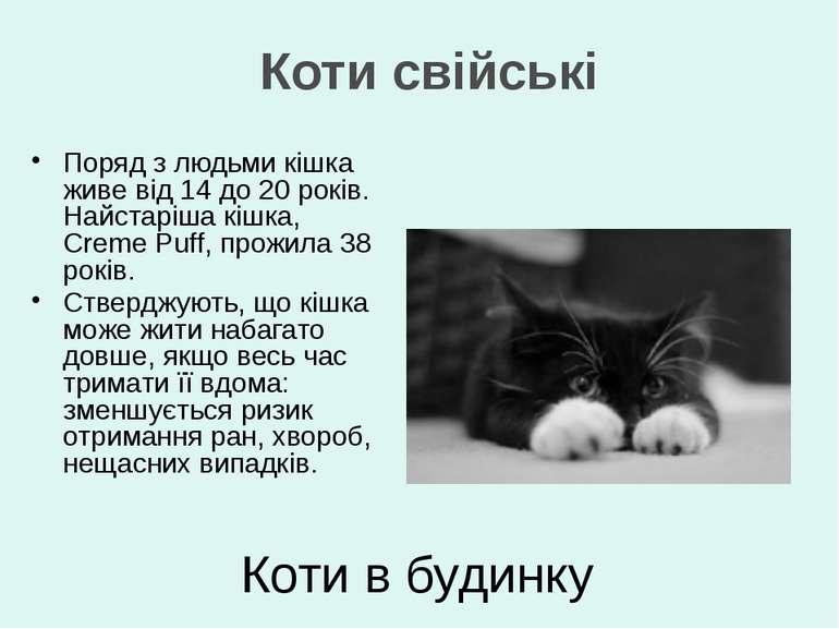 Поряд з людьми кішка живе від 14 до 20 років. Найстаріша кішка, Creme Puff, п...