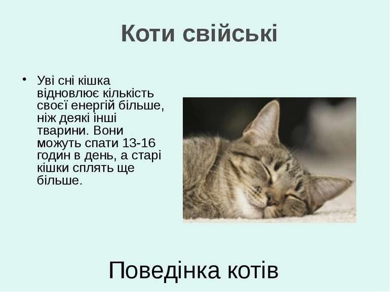 Уві сні кішка відновлює кількість своєї енергій більше, ніж деякі інші тварин...