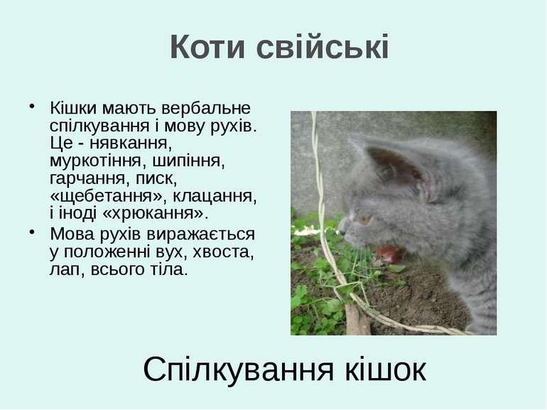 Спілкування кішок Кішки мають вербальне спілкування і мову рухів. Це - нявкан...