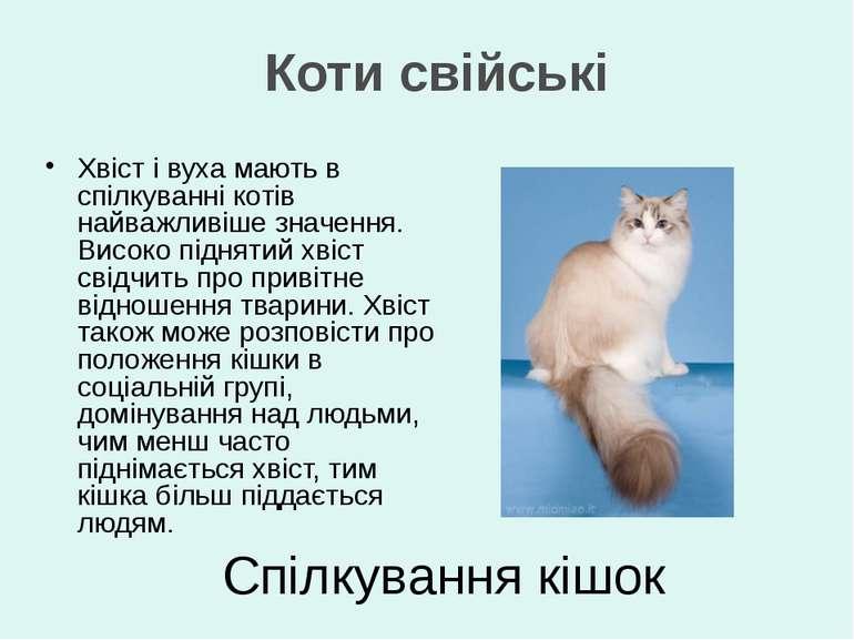 Спілкування кішок Хвіст і вуха мають в спілкуванні котів найважливіше значенн...