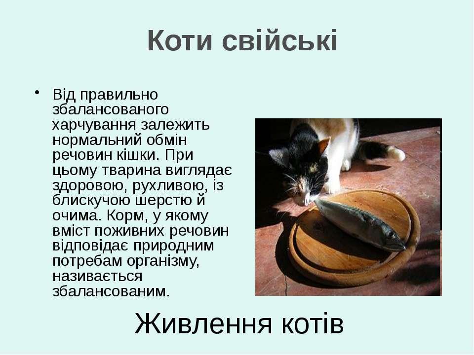 Живлення котів Від правильно збалансованого харчування залежить нормальний об...