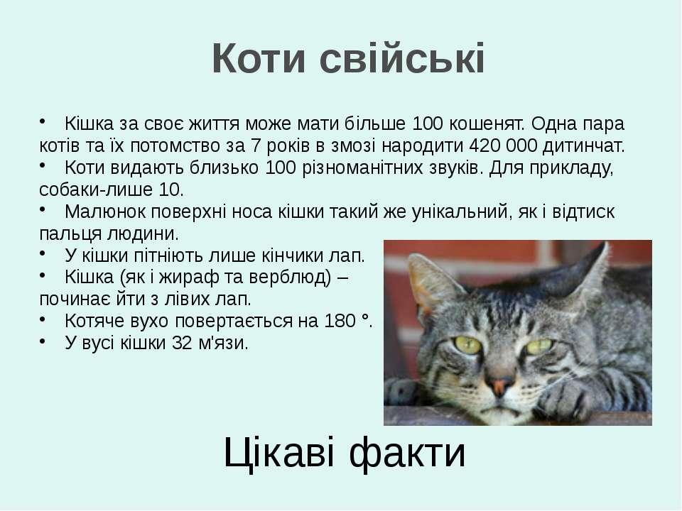 Цікаві факти Кішка за своє життя може мати більше 100 кошенят. Одна пара коті...